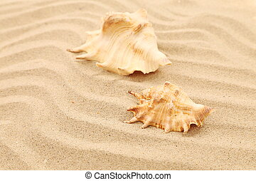 Two shells is located on sandy background