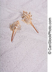 Two shells on a sand background