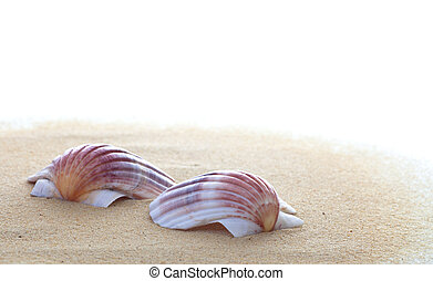 Two Shells on the Beach