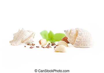Two shells with nuts