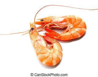 Two shrimp over white background