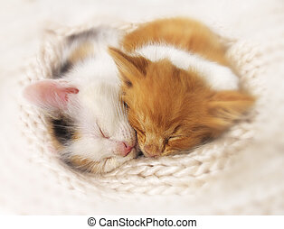Two sleeping kittens - Two kittens sleep a heap. isolated on...