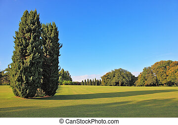 Two slender cypress on a lawn in the park