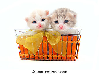Two small kittens in a basket