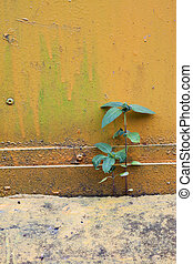 Two small palnt grow on cement's ga