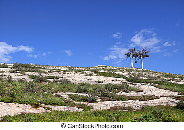 Two small trees on the hill