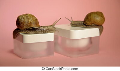 Two snails crawling in a jar of cream, snail slime cream....