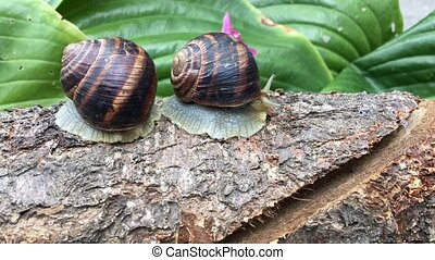 two snails on a tree trunk