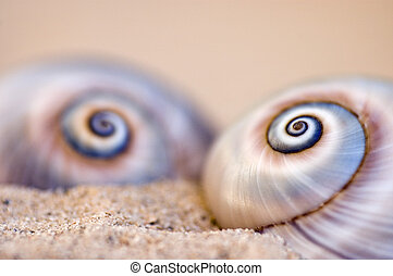 Two Snailshells on the Beach - Snailshells found at the...