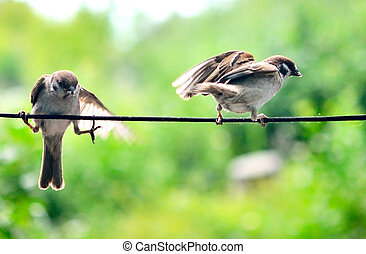 two sparrows on a rope