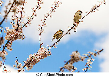 Two sparrows sitting on the branch