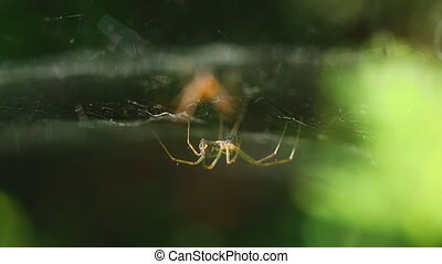 Two spider on the web