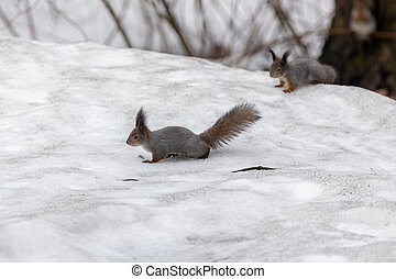 two squirrels in the park