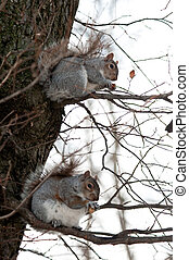Two squirrels on a tree having dinner