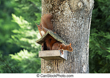 Two squirrels on a tree