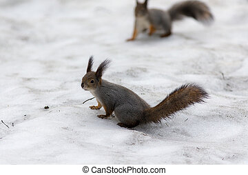 two squirrels on the snow