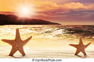 Two starfish in sand on the beach