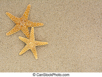 Two starfish on sand background on a beach