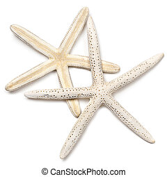 Two lovely white starfish, isolated on white with soft shadow. Great detail and texture.