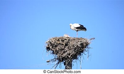 Two storks in nest. One stork stands on one leg