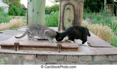 Two stray cats feeding near pipes