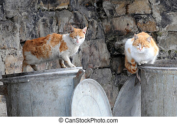Two stray cats sit on garbage bins in the European city