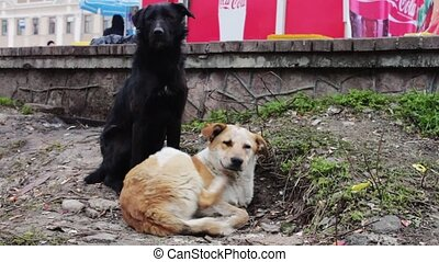 Two stray dogs outdoors play - Two mutts strolling on the...