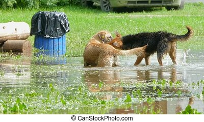 two stray dogs play in the pool of the park. - Two stray...