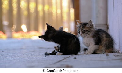 Two Stray Kittens on the Street of the City - Two Stray...