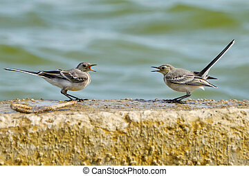 Two swallows are negotiating