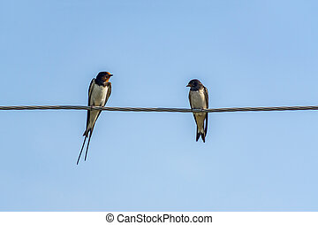 two swallows on a wire against blue sky