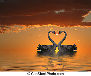 Two Swans at Sunset - Two romantic swans at sunset with...