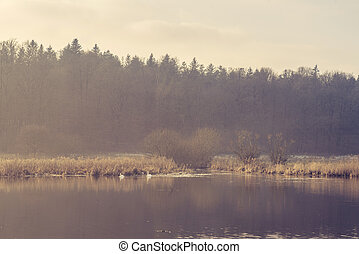 Two swans in an idyllic lake in the morning