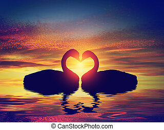 Two swans making a heart shape at sunset. Valentine's day