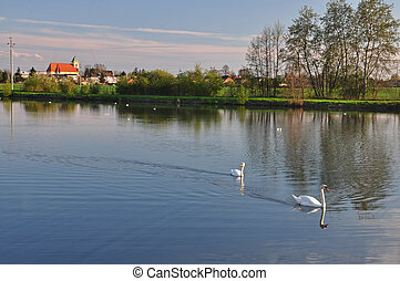 Two swans on a pond before sunset.