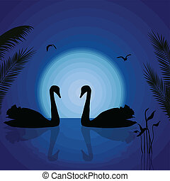 Two swans under the blue sunset - Two swans under the blue...