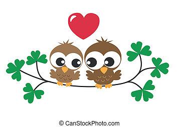 two sweet owls in love