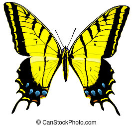 Two-tailed Swallowtail Butterfly top - Two-tailed...