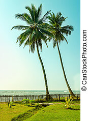 Two tall palm trees on exotic Asian islands