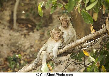 Two Thai Monkeys