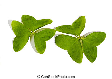 Two Three Leaf Clovers on White Background