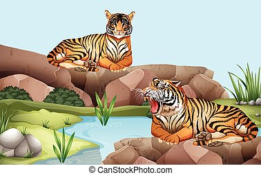 Two tigers by the pond