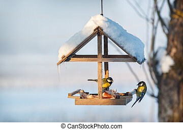 Two tit in winter bird feeder