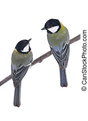 two titmouse on a white background