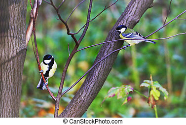 Two Tits. Tits sit on a tree branch among green leaves.