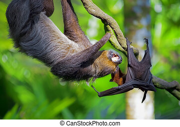 Two-toed Sloth and flying fox