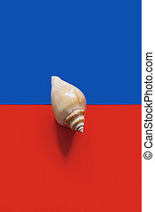 Two-tone background with seashell