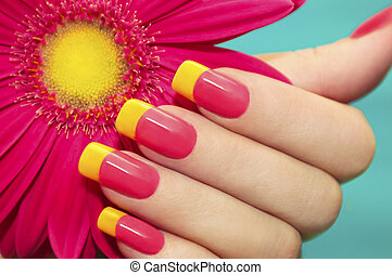 Two-tone manicure with pink and yellow varnish with flower gerbera on a blue background.