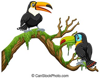 Two toucan birds standing on the branch