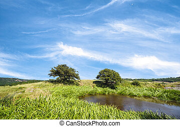 Two trees by a lake on a meadow